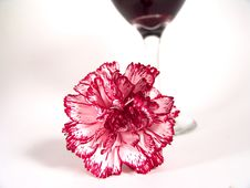 Free Carnation Wine Glass Stock Images - 621264