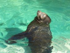 Free Sealion Stock Photography - 621422