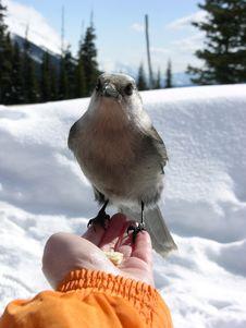 Free Bird Stock Images - 621564