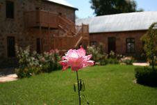 Free Rose Cottage Stock Photo - 621720