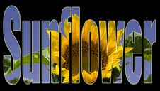 Free Sunflower Text Stock Photography - 621932
