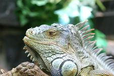 Water Dragon Head Royalty Free Stock Images