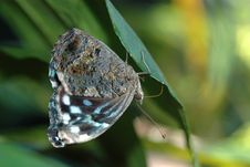 Free Butterfly On Leaf Royalty Free Stock Photo - 622525