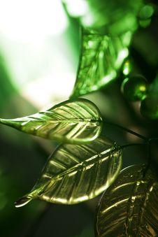 Free Green Leaves Royalty Free Stock Photo - 622605