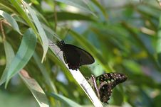Free Butterflies On Leaf Stock Photos - 622623