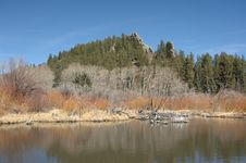 Beaver Dam In The Spring Stock Photo