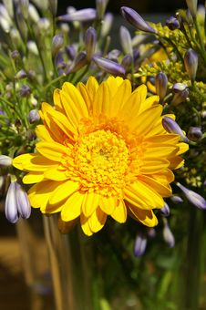 Free Flowerwheel Royalty Free Stock Photo - 623175
