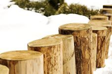 Free Stumps Royalty Free Stock Images - 623379