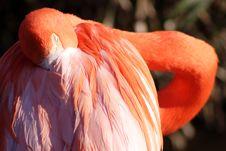 Free Flamingo Stock Images - 624194