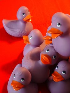 Purple Ducks Playing Royalty Free Stock Photos