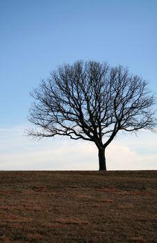Free Lonely Tree Royalty Free Stock Photography - 624577