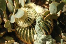 Free Cactus Garden Royalty Free Stock Photography - 624717