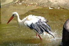 Free Stork Splash Stock Photo - 625020