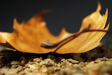 Free Sand And Leaf Stock Images - 625684