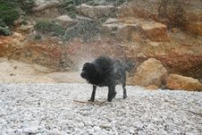 Free Wet Dog Royalty Free Stock Photo - 625815