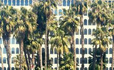 Free Building And Palm Trees Stock Photo - 627940