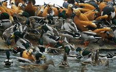 Free Bird S Market Stock Image - 628611