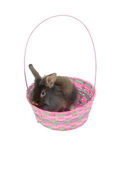 Free Easter Lion Rabbit 3 Stock Photo - 629600