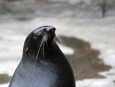 Free Sea Cat Stock Image - 629711