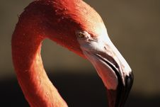 Free Pink Flamingo.. Stock Photo - 629790