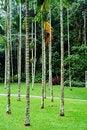 Free Tropical Garden Royalty Free Stock Photos - 6201348