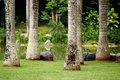 Free Tropical Garden Royalty Free Stock Photo - 6201385