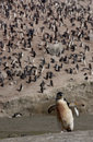 Free Penguin At The Beach Stock Photography - 6204092
