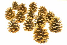 Free Pine Cones Isolated Stock Images - 6200244