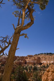 Free Bryce Canyon Royalty Free Stock Photos - 6201598
