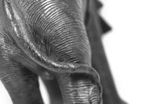 Free Elephant Tail Back Stock Photography - 6201742