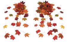 Free Autumn Maple Leaves Royalty Free Stock Photos - 6203868