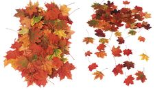 Free Autumn Maple Leaves Royalty Free Stock Photography - 6204017