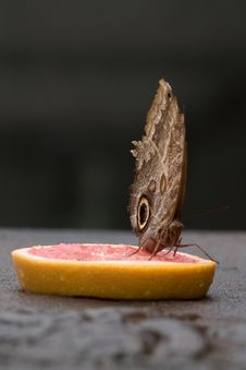 Butterfly On Ruby Grapefruit Stock Image
