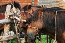 Free Horse Royalty Free Stock Photo - 6205295
