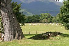 Free Irish Farmland Stock Photos - 6205303