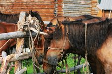 Free Horse Stock Images - 6205364