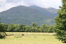 Free Irish Farmland Stock Image - 6205371
