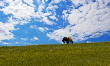 Free Horses On Green Meadow Stock Photo - 6206480
