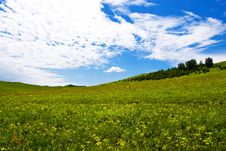 Free Meadow,blue Sky Stock Photos - 6206493