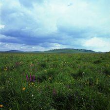 Free Grassland Royalty Free Stock Image - 6206616