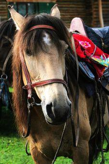 Free Horse Stock Photo - 6207300