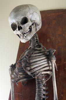 Antique Medical Skeleton Royalty Free Stock Photos