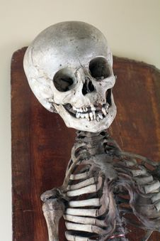 Antique Medical Skeleton Stock Photos