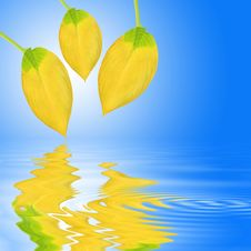 Free Golden Leaf Beauty Royalty Free Stock Images - 6208249