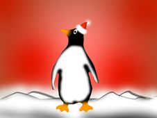 Free Penguin Stock Images - 6208514