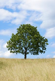 Free Lonely Tree Royalty Free Stock Images - 6208689