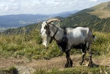 Free Goat On The Tourist Track Stock Photography - 6209762