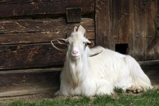 Free Goat Watching The House Stock Image - 6209791