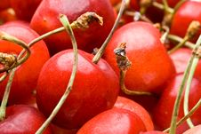 Free Fresh Cherry Royalty Free Stock Images - 6210289