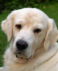 Free Dog Royalty Free Stock Photo - 6211835